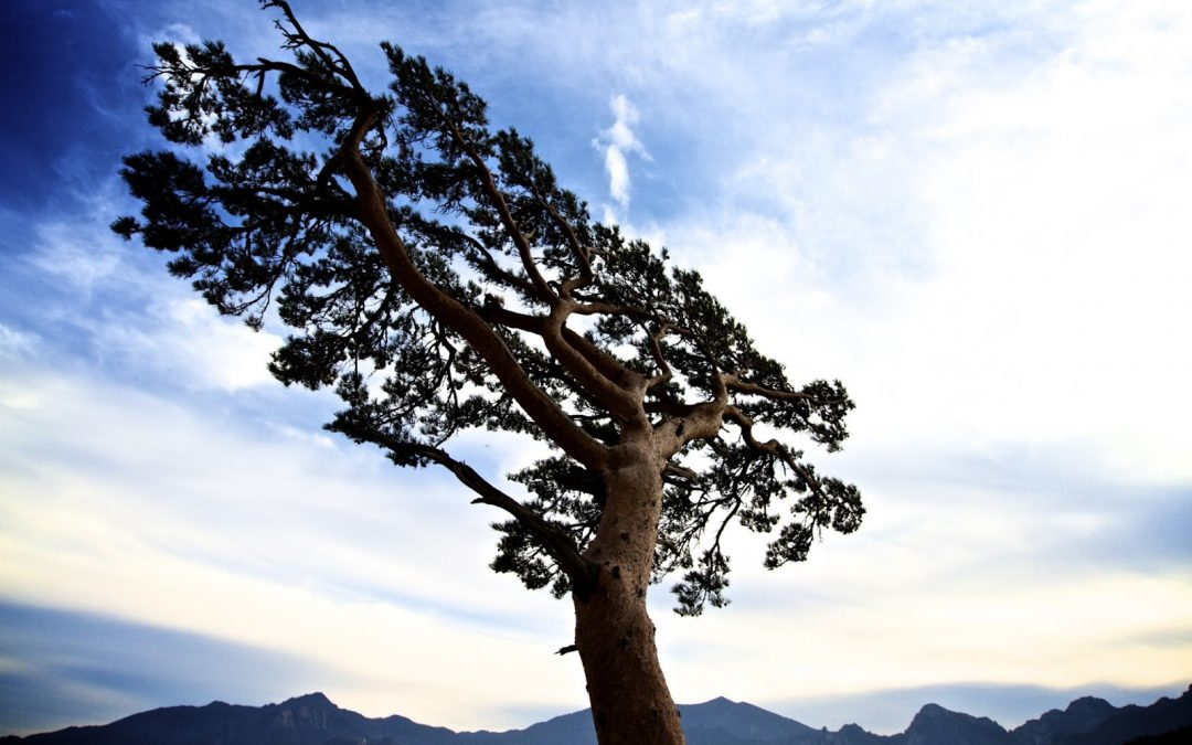 Resilience and Personal Effectiveness